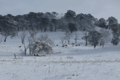 Snow-October-2012-(4)